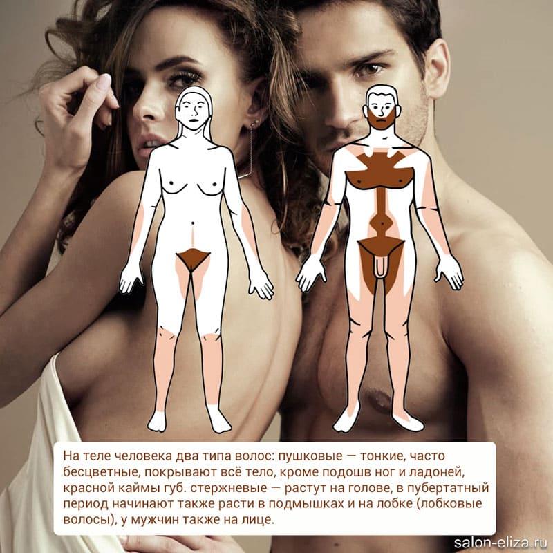 Строение и структура волос человека